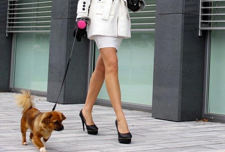 Lishinu Original Hundeleine Hund geführt in der Stadt