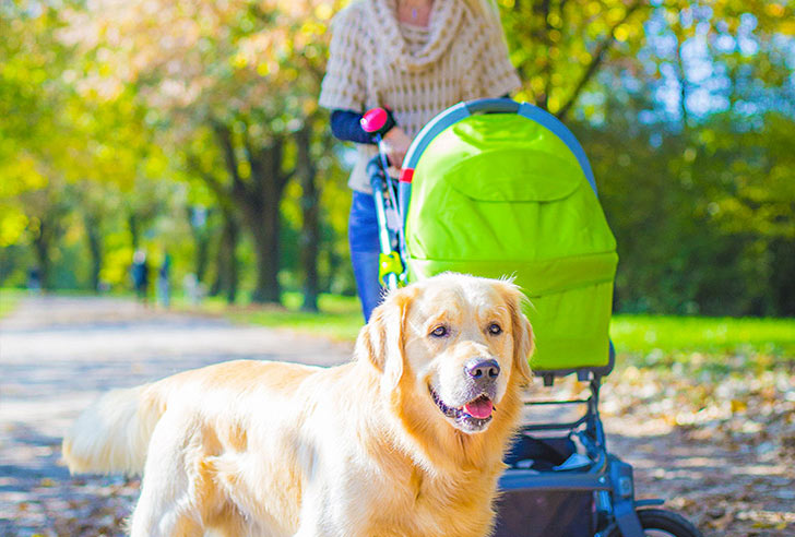 Lishinu Designerleine im Park am Kinderwagen mit Golden Retriever